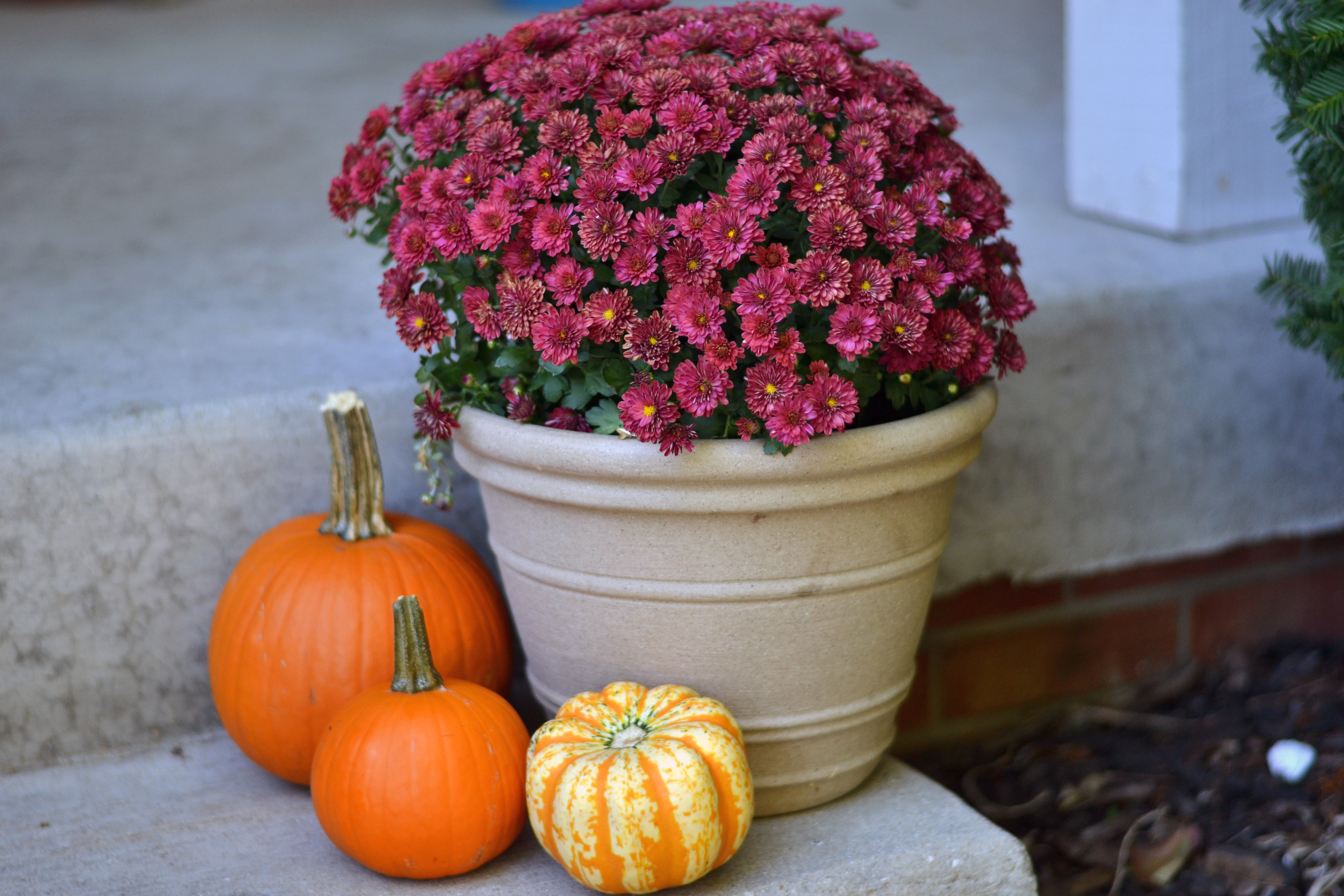 easy fall decor for front porch